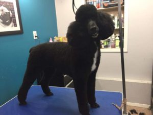 Pet Styling By Becki, Ontario, Peterborough